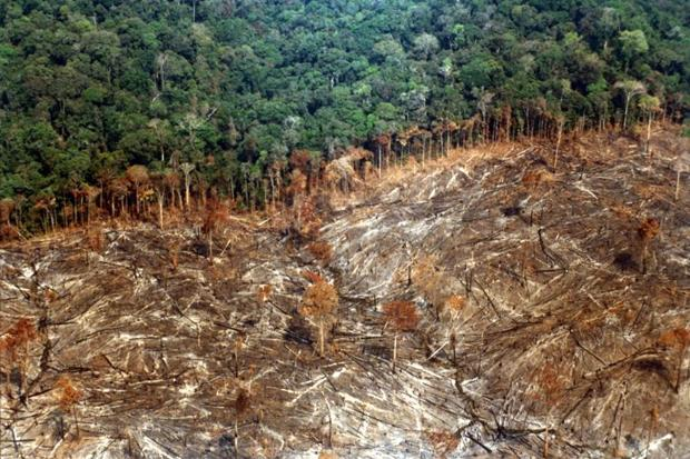 Deforestation in the Amazon rises again
