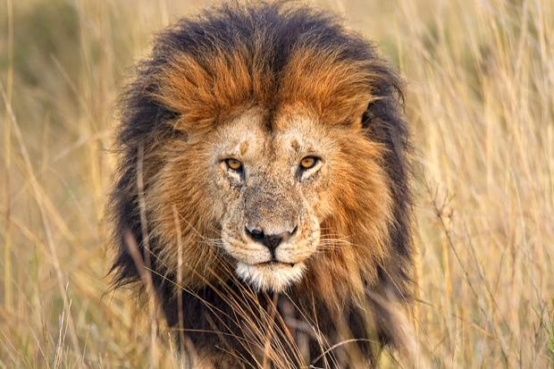 Walking With Big Cats South Africa