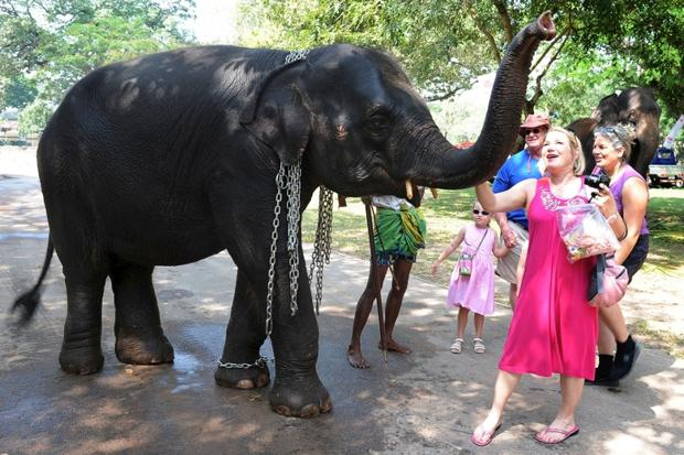 How tourists are wiping out Sri Lanka's elephants