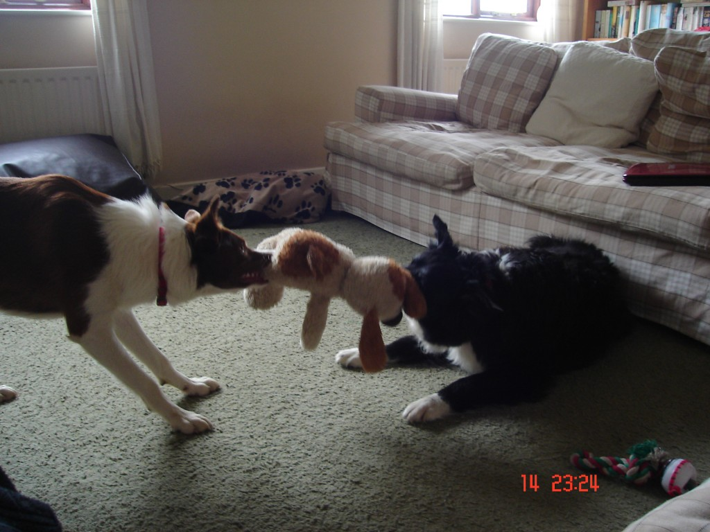 Bess and Tilly fighting
