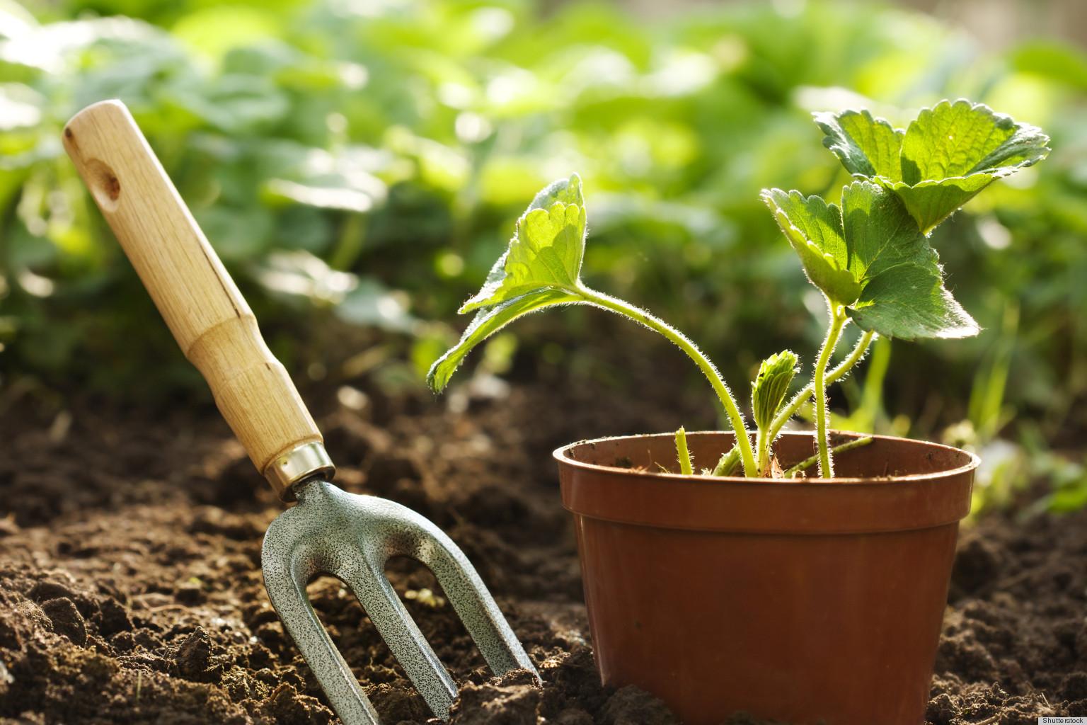 Organic Gardening – Say NO to Tilling